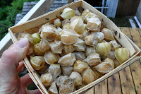 basket full of ground cherries