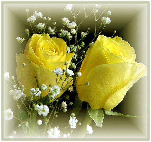 Free Desktop Background Wallpapers Most Beautiful Yellow Colour