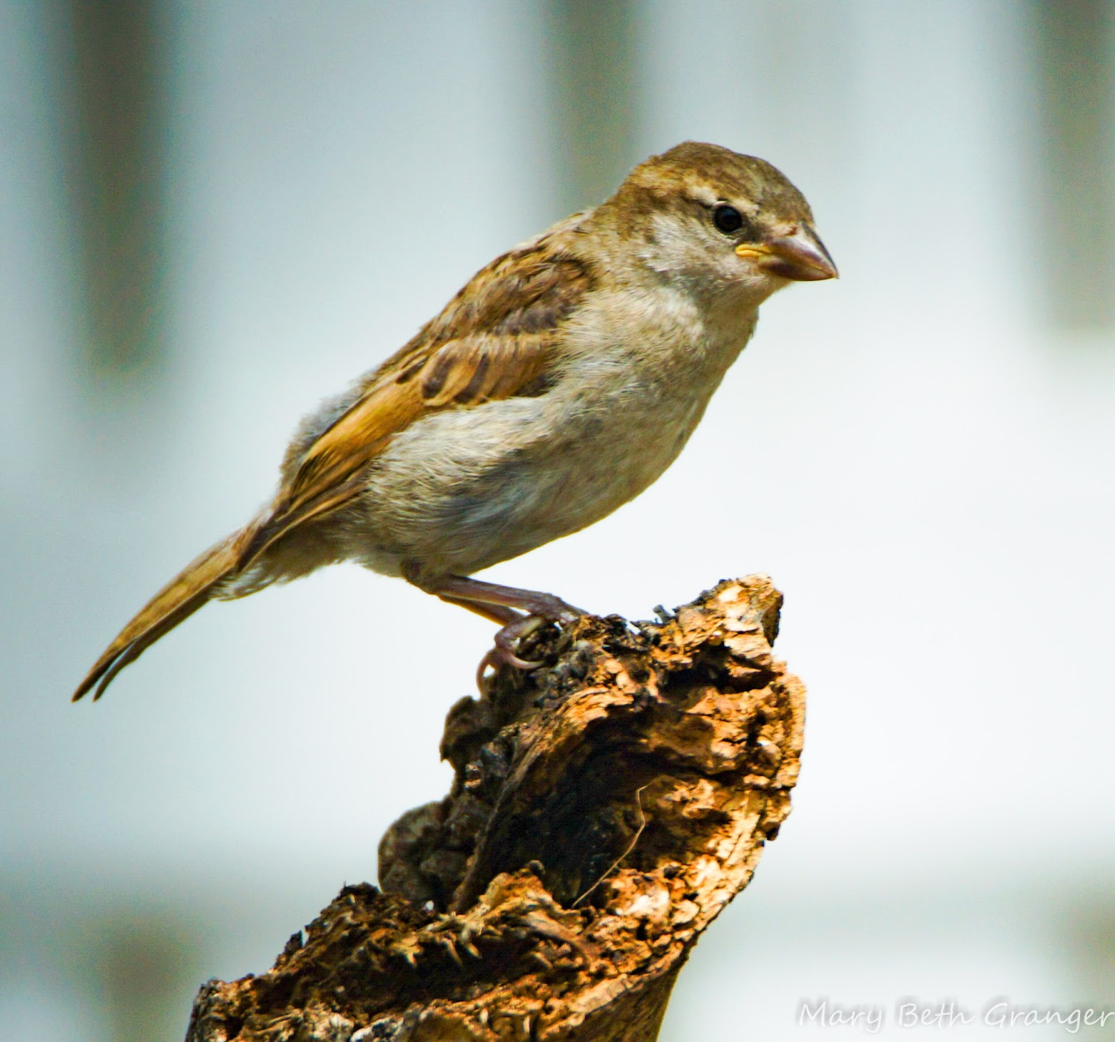 reviewing tips on backyard perch for bird photography
