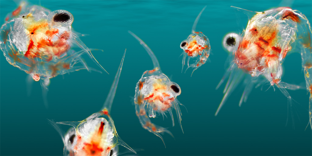 plankton as indicators of ecosystem change blue planet society