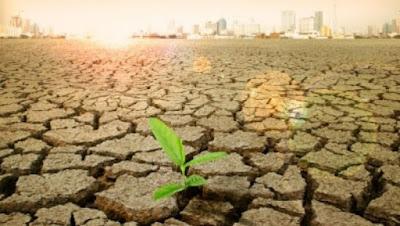 Upaya Pemerintah Indonesia Menangani Pemanasan Global www.guntara.com