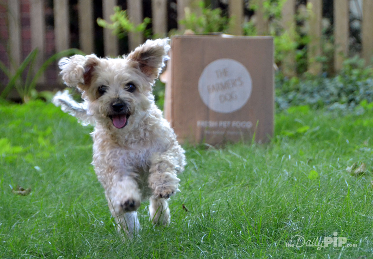 The Farmer's Dog subscription dog food helps dogs maintain a healthy weight through pre-portioned custom meals