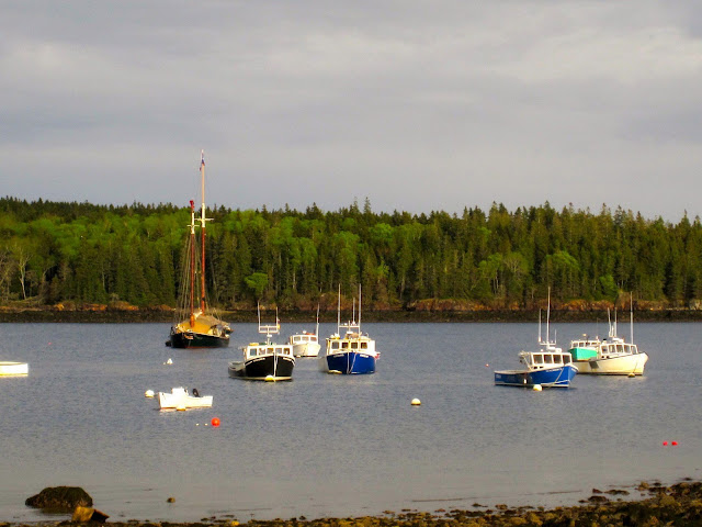 boats in harbor at owls head, maine: LadyD Books