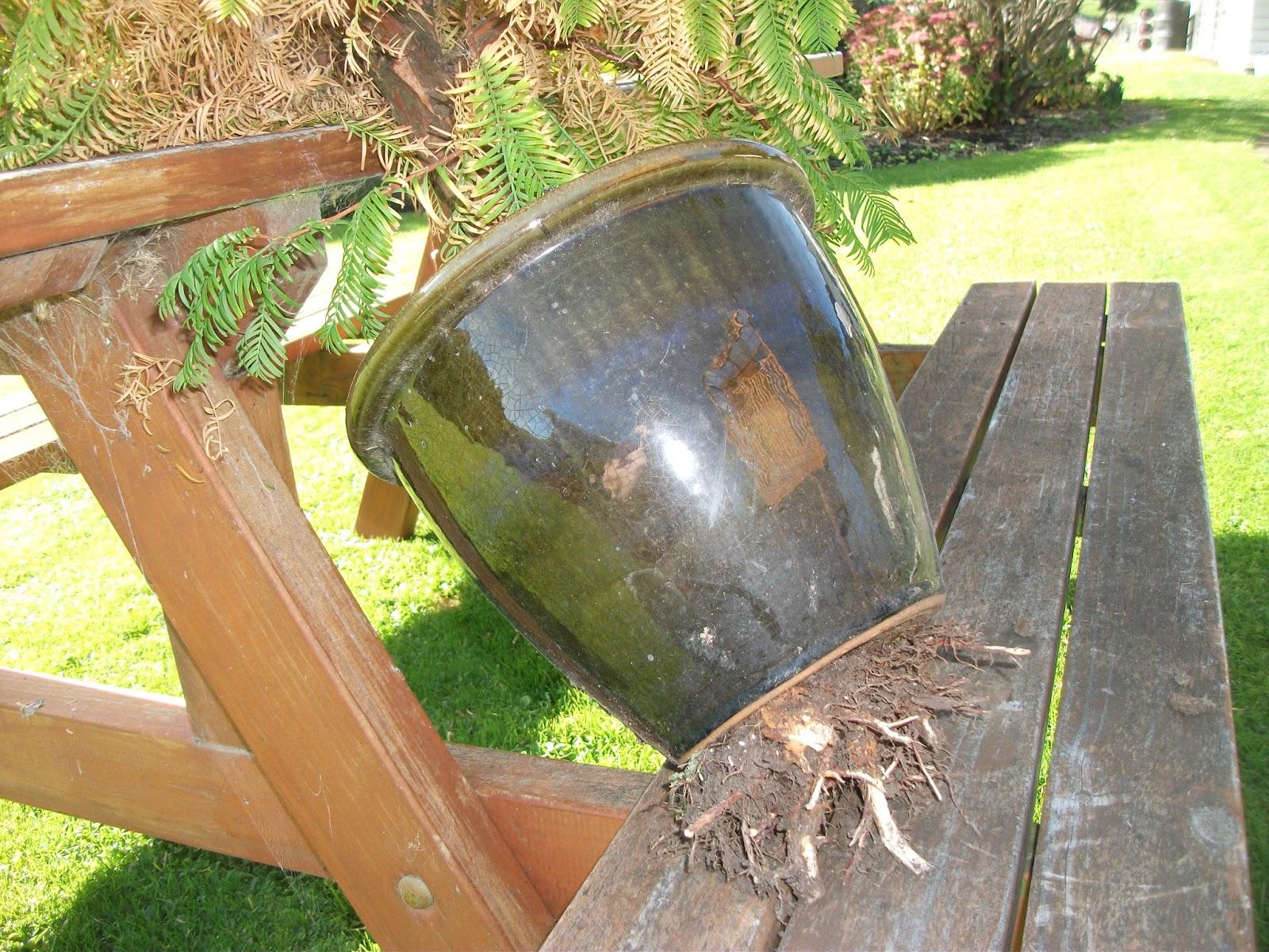 Fionna39s Bonsai Pots Kiwi Style Proudly Made In New Zealand