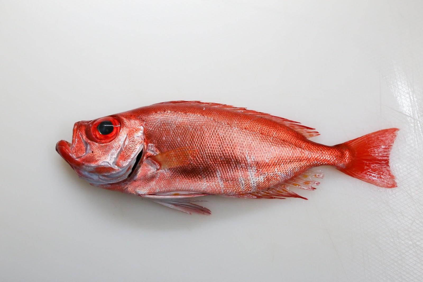 德先生魚筆記: 大棘大眼鯛
