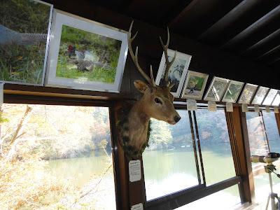 交野いきものふれあいの里・ふれあいセンター 奈良県・大峰山系の野生シカ