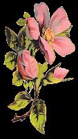 flower rose floral botanical art illustration clipart digital download