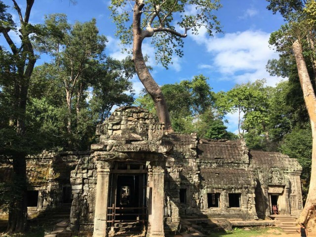 Ta Prohm in Siem Reap Cambodia