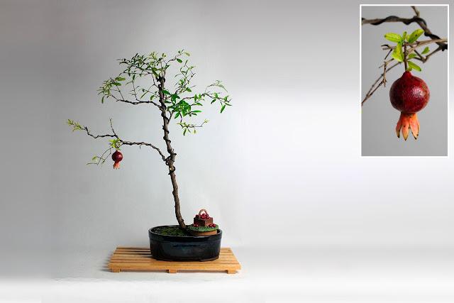 банзай дерево, интерьер, фото, дизайн