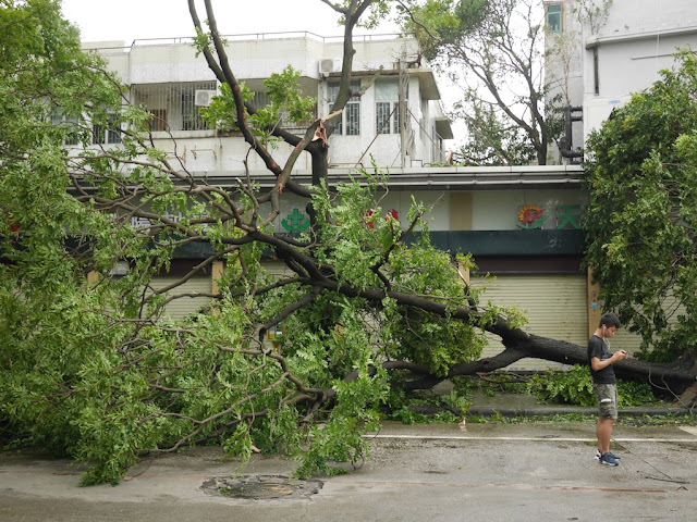young man checking a mobile phone next to a fallen tree in Zhuhai