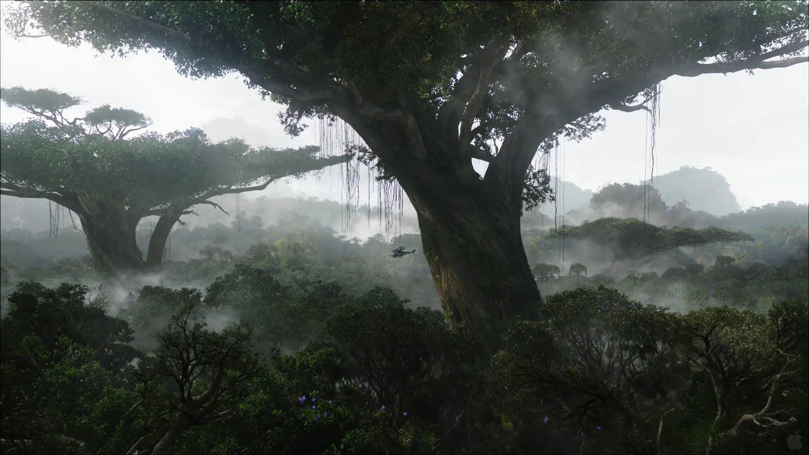 Rainforest HD Wallpapers – wallpaper202