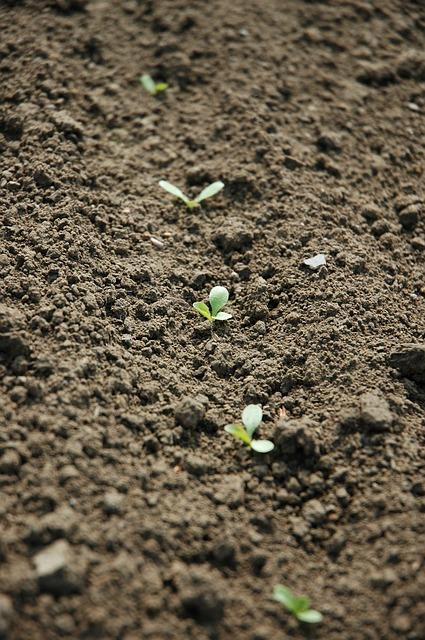 planche de semis