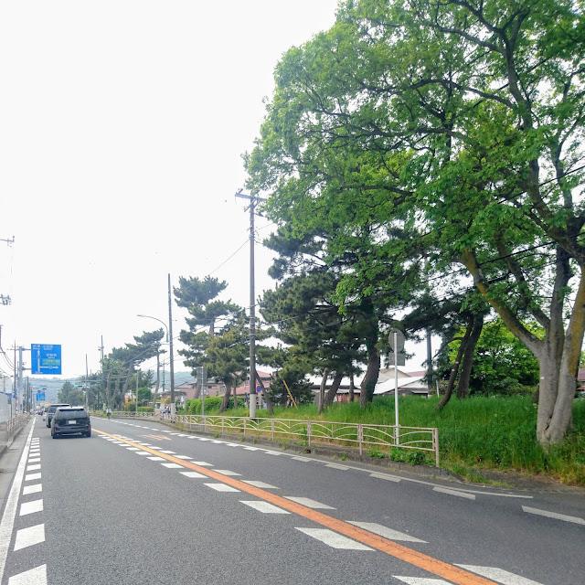 東海道(国道1号) 大磯 松並木