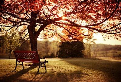 Blog-inspirando-garotas- plantas- outono