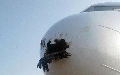 Αετός «καρφώθηκε» σε ρύγχος αεροπλάνου