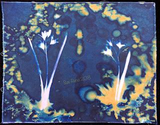 Wet Cyanotype_Sue Reno_Image 303