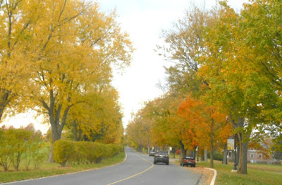 Fall Foliage in Hershey Pennsylvania