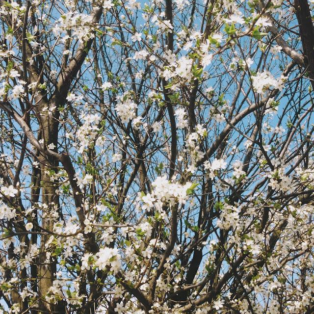 Jar už bola naozaj na každom rohu.