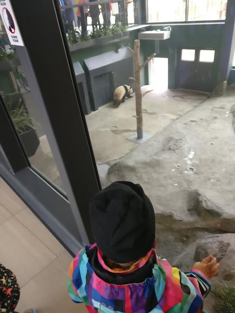 pyry panda