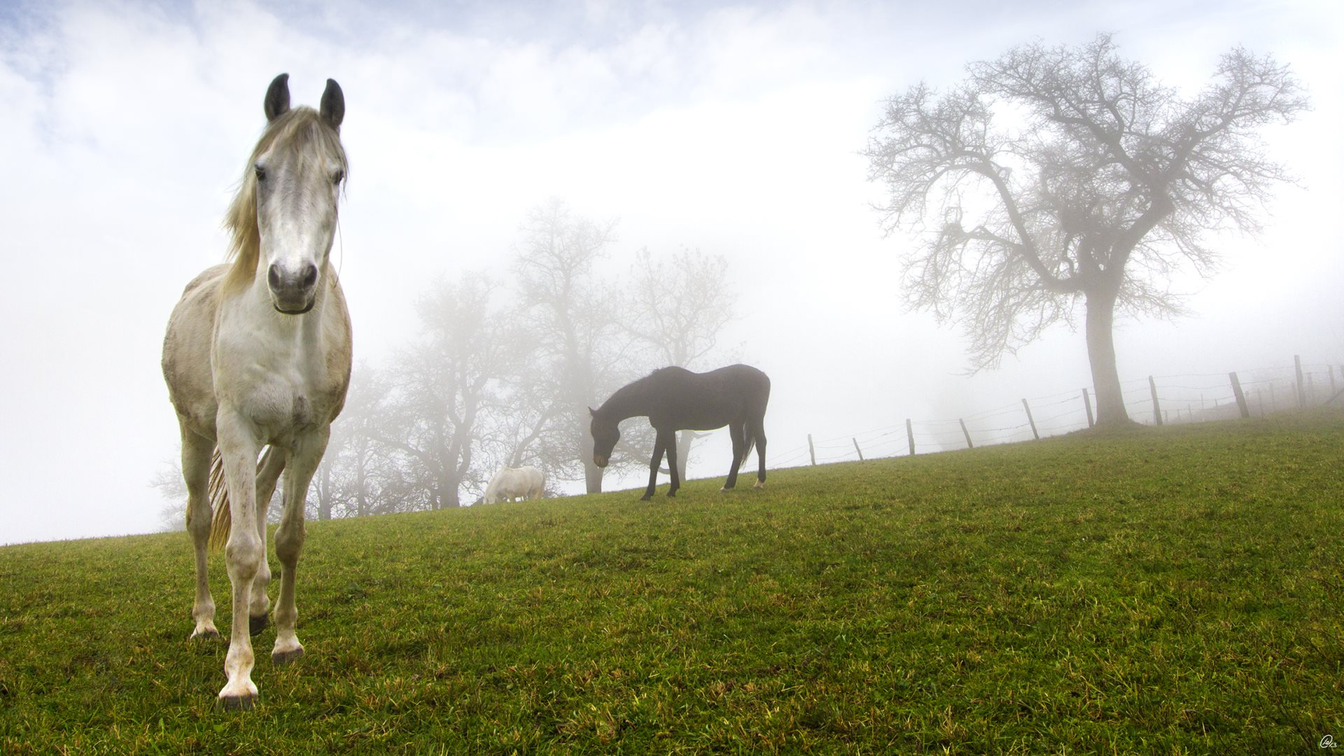 White and Black Horses | HD Wallpapers · 4K