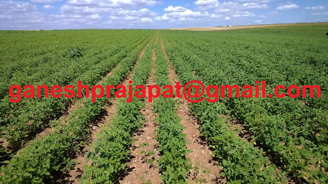 Guar seed & Guar gum future prices and Increased MSP ( Minimum Support Price ) , Guar, guar gum, guar gum and slick water, Guar gum price, Guar gum export,  guar gum news, NCDEX guar gum price, Guar gum report, guar seed production, guar gum consultant, guar seed export, guar gum export from india 2017-2018 , guar, guar gum, guar gum news, Guar gum export-2017-2018, Guar gum export-from India during 2017-2018, Guar gum export data -2017-2018, Guar gum rate , NCDEX guar gum price,  guar gum export-2017, guar gum export-2018, guar gum demand-2017, guar gum demand-2018, guar gum production, guar gum cultivation, guar gum cultivation consultancy, Guar, guar gum, guar price, guar gum price, guar demand, guar gum demand guar seed production, guar seed stock, guar seed consumption, guar gum cultivation, guar gum cultivation in india, Guar gum farming, guar gum export from india, Fundamentally Guar seed and guar gum are very strong , Guar, guar gum, guar price, guar gum price, guar demand, guar gum demand, guar seed production, guar seed stock, guar seed consumption, guar gum cultivation, guar gum cultivation in india, Guar gum farming, guar gum export from india , guar seed export, guar gum export, guar gum farming, guar gum cultivation consultancy, today guar price, today guar gum price, ग्वार, ग्वार गम, ग्वार मांग, ग्वार गम निर्यात 2017-2018, ग्वार गम निर्यात -2018, ग्वार उत्पादन, ग्वार कीमत, ग्वार गम मांग,