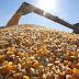 ATUAÇÃO: Hugo Motta consegue 3ª redução no preço do milho vendido pela CONAB