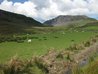 Sheep grazing at the foot of cliffs, Snowdonia National Park, Wales