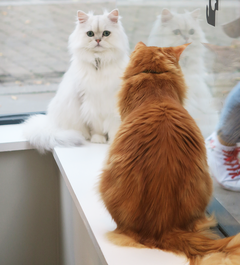 Cat Cafe Manchester Review | Colours and Carousels - Scottish Lifestyle, Beauty and Fashion blog