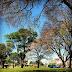Lei Adote uma Praça já está em vigor em Uruguaiana