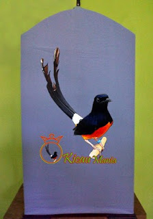 List/Harga Terbaru Kerodong Sangkar Burung Kenari,Kacer,Cucak Ijo, Kores dan Paling Lengkap