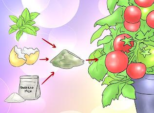 Πως να δημιουργήσετε εύκολα δικά σας φυσικά οικιακά λιπάσματα