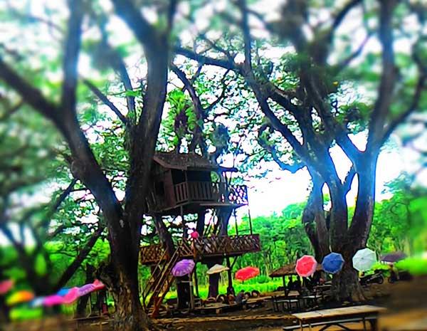 Wisata Rumah Pohon TPK Jatirogo