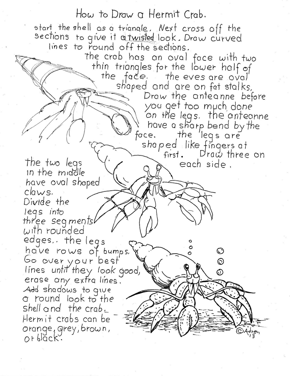 How To Draw Worksheets For The Young Artist How To Draw A Hermit Crab Worksheet