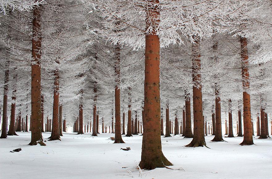 Winter tree landscape-1