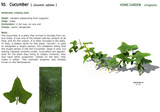 3dsMax高精度花園植物3D模型下載