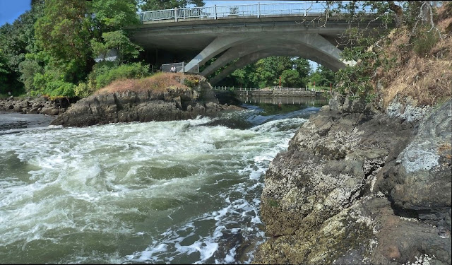White water spills out of the upper Gorge in Saanich, BC...
