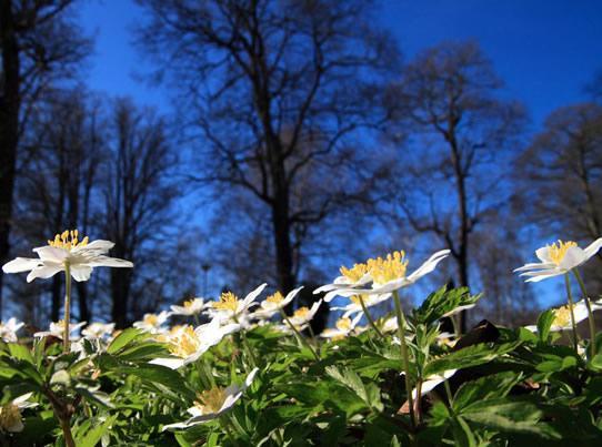 European flora