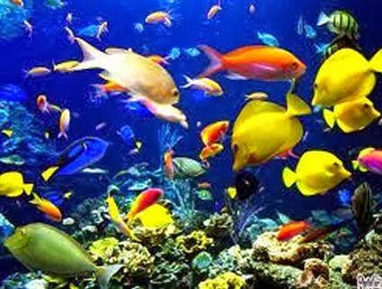 Lingkaran Kehidupan 4: Falsafah Ikan Di Laut