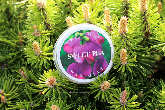 Sweet Pea Kringle Candle