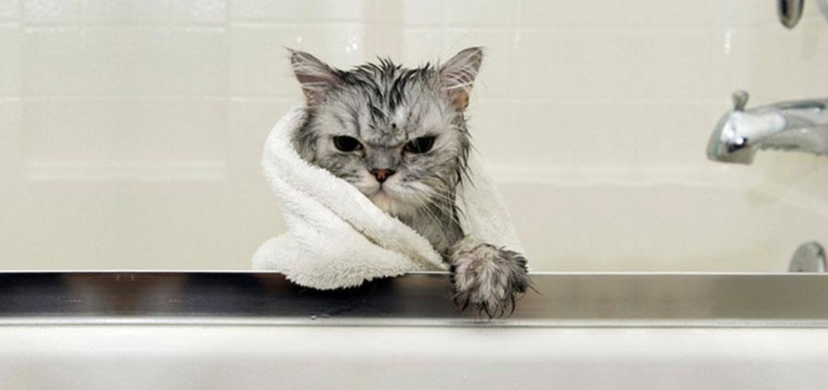 Immagini divertenti di gatti bagnati - Animali Zoo