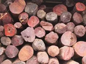 gỗ Đàn Hương ( Sandalwood )