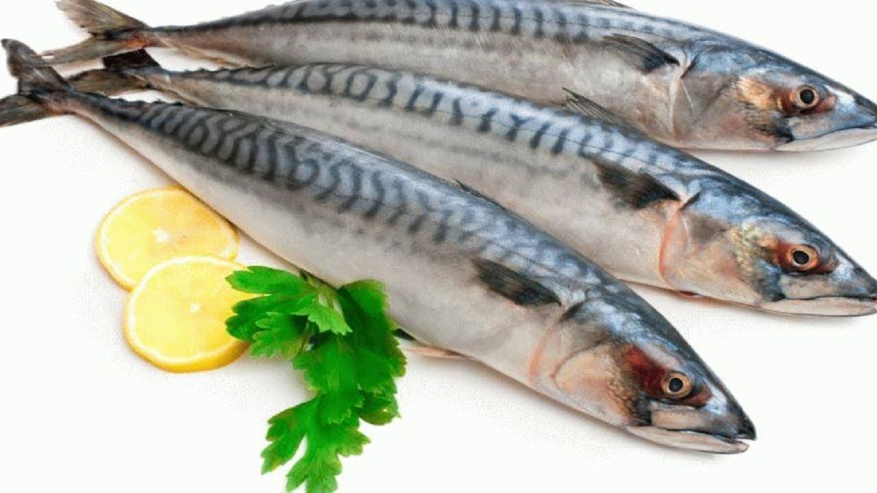 Top 10 vựa hải sản Côn Đảo tươi ngon nên mua khi du lịch