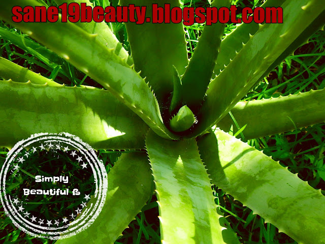 Beauty benefits of Aloe Vera with tips and uses.