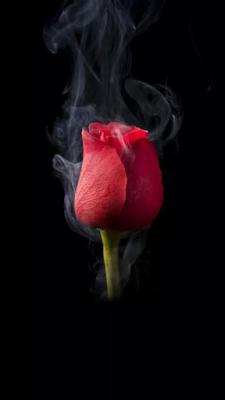 puisi cinta dan rindu juga kenangan