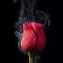 Puisi Cinta: Cinta itu layu
