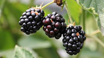 blackberries hd wallpaper