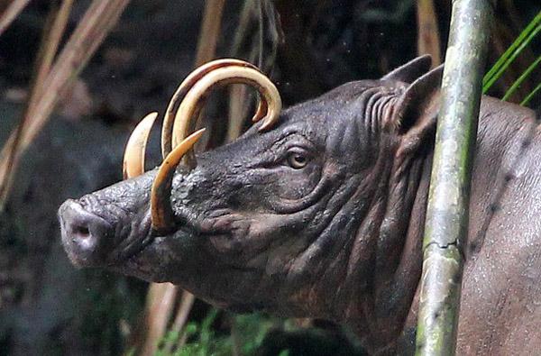 42++ Hewan endemik di pulau papua adalah terupdate