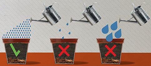macetas exceso agua