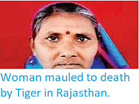 https://sciencythoughts.blogspot.com/2018/12/woman-mauled-to-death-by-tiger-in.html