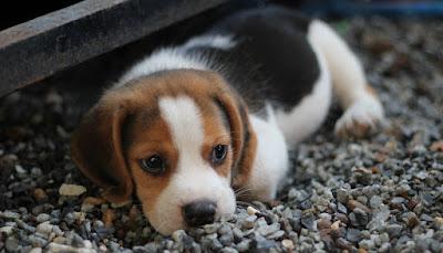 Productos veterinaria Farmacia 2 online